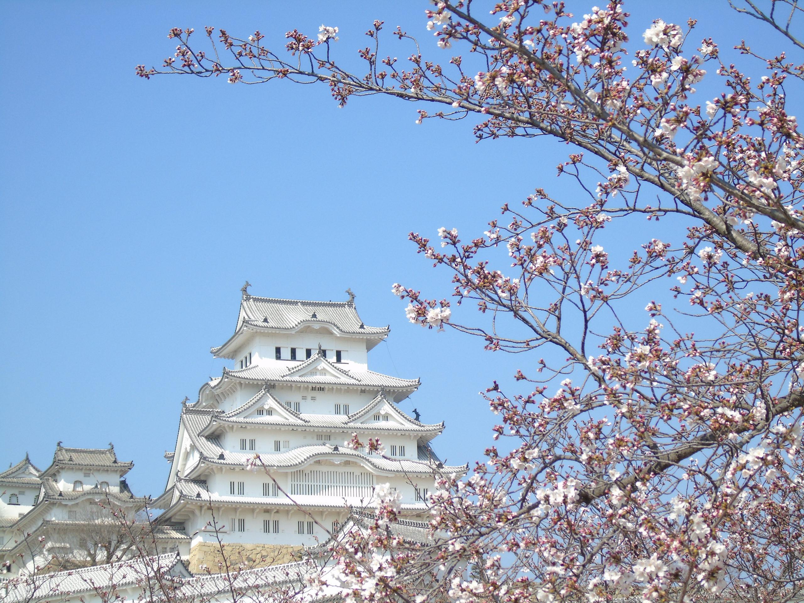 himeji haut sakura droite