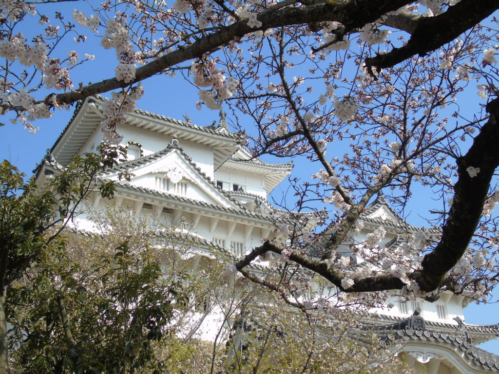 Himeji sakura contre plongée