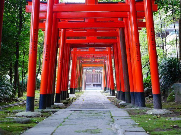 Japon moitié Voyage