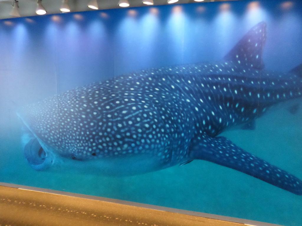 blue-shark-whale².jpg