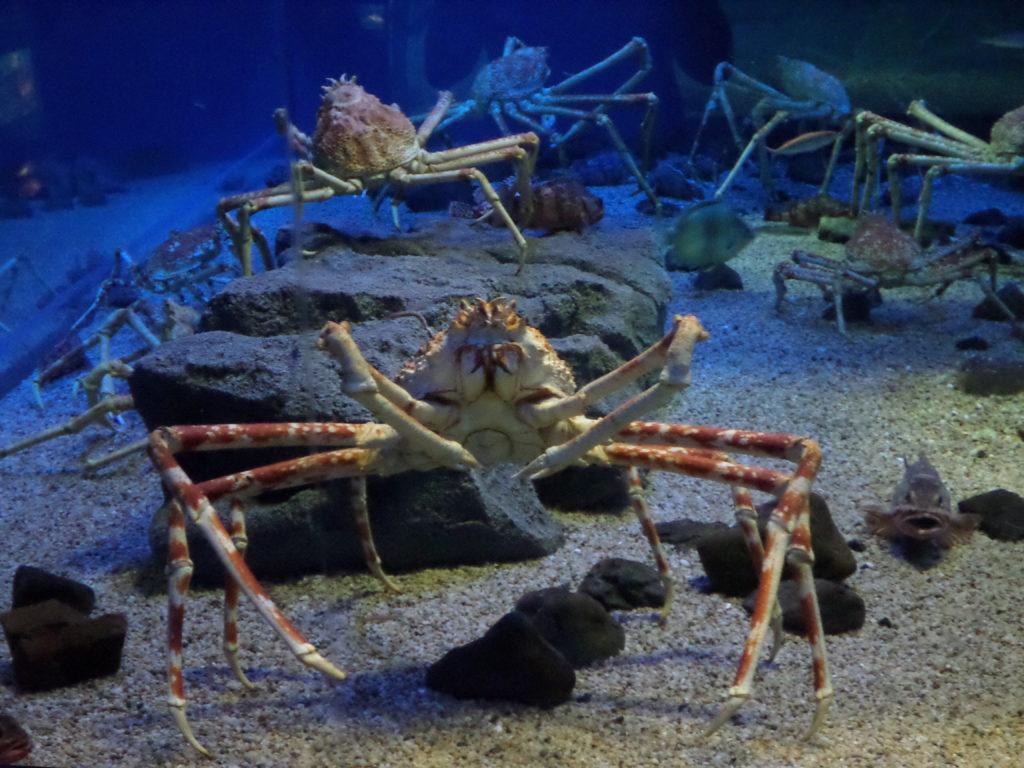 sea-spider